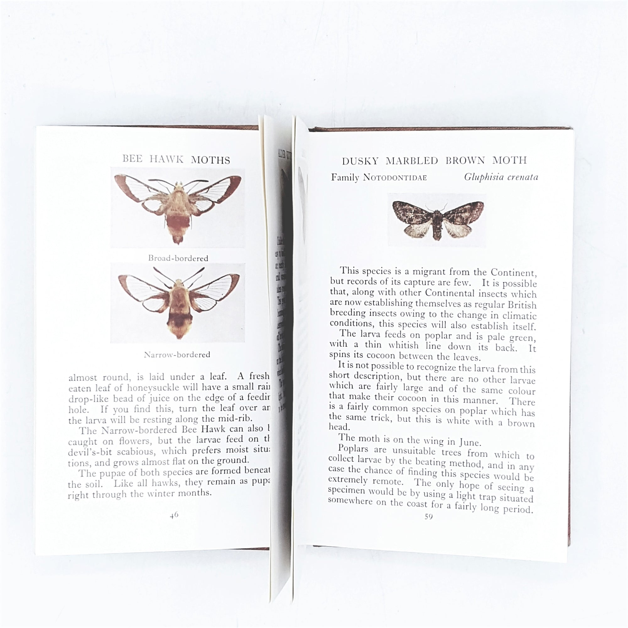 Observer's Book of the Larger British Moths 1953
