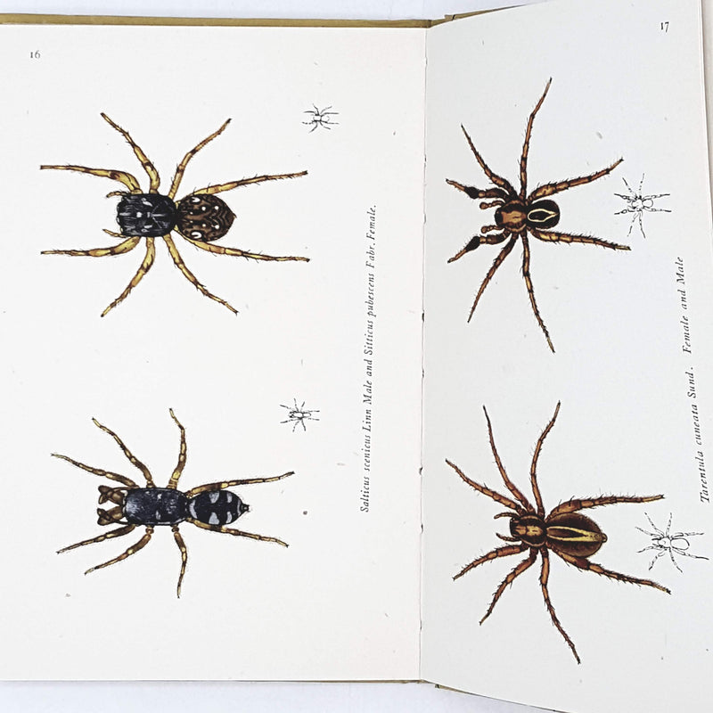 First Edition King Penguin: Spiders 1947