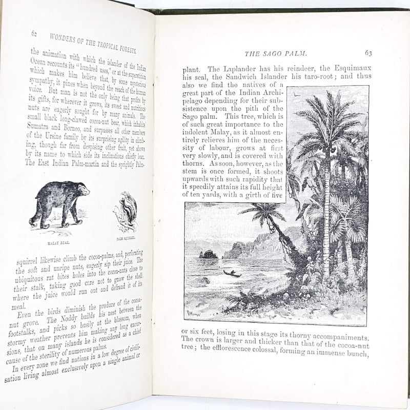 Illustrated Wonders of the Tropical Forests 1888