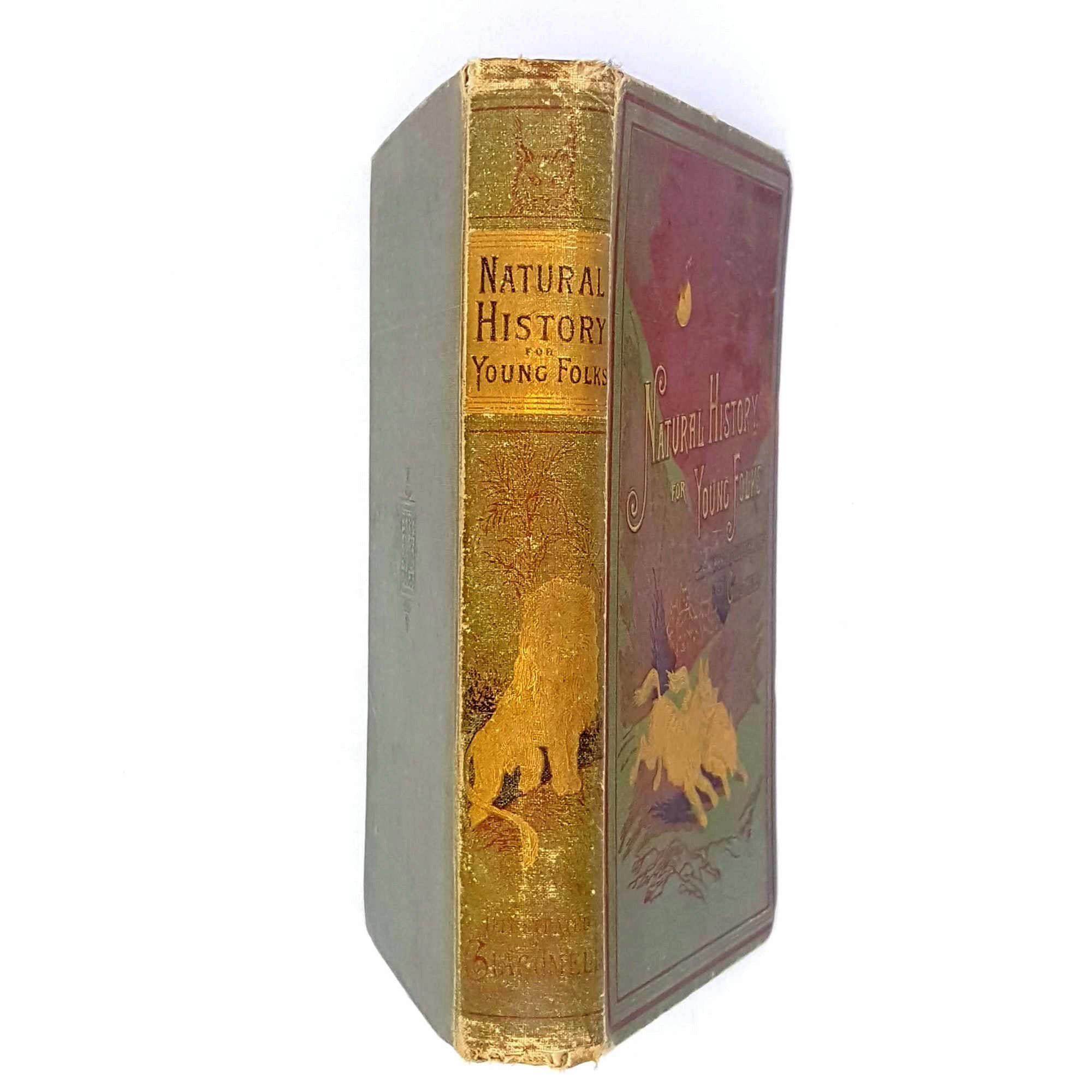 Natural History for Young Folks by Mrs. C. C. Campbell 1884