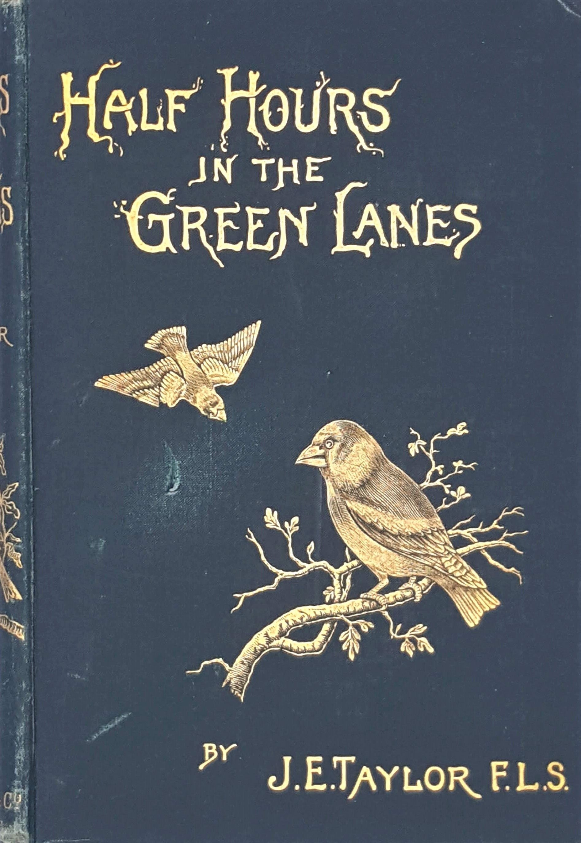 Half Hours in the Green Lanes by  J. E. Taylor 1891