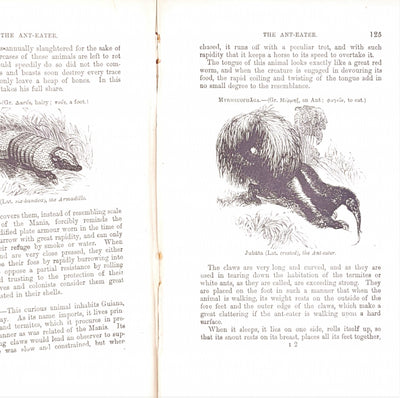 The Boy's Own Book of Natural History by Rev J G Wood
