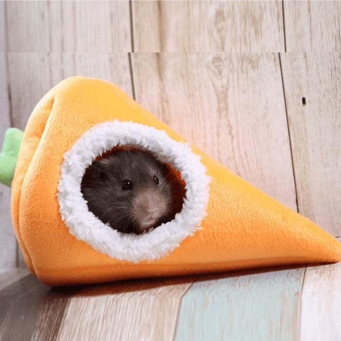 kiwi bed watch pets hamster youtube bedding bad good