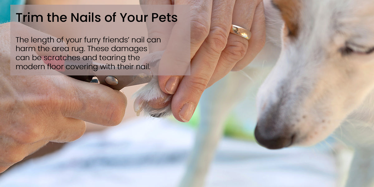 Trim the Nails of Your Pets