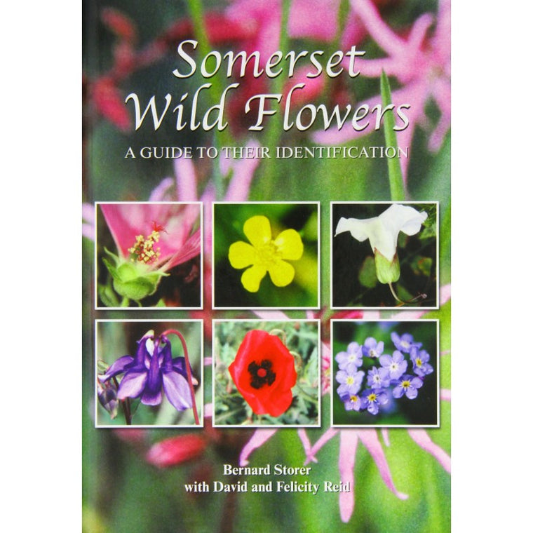 Somerset Wild Flowers - A Guide to their Identification
