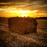 Sunset over hay bale