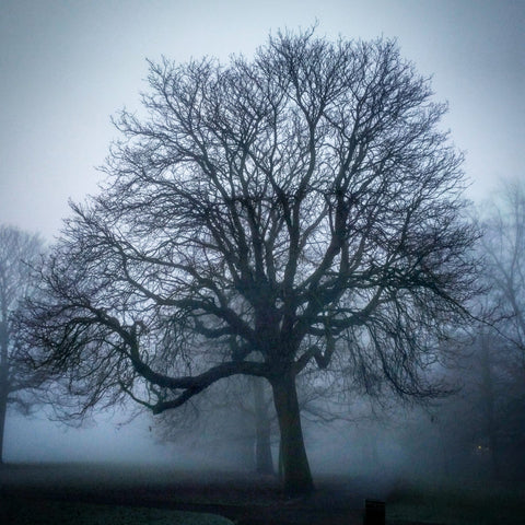 Misty Greenwich tree