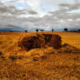 Haystack and trees