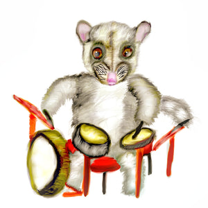 Possum percussionist