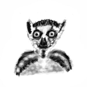 Ring tailed lemur middle distance stare