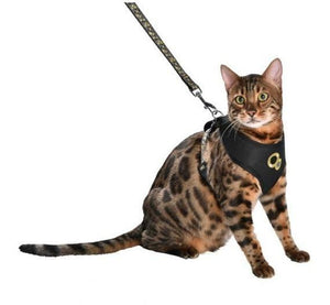 CHAMANE Harness and Lead (M-L cats)