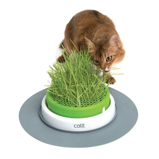 Grass Planter - My Cat and Co.