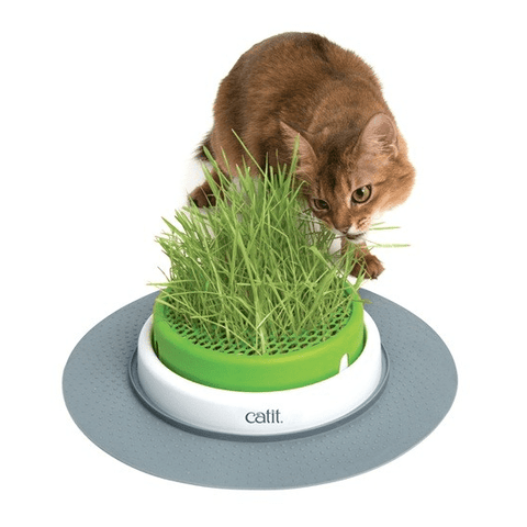 CATIT SENSES 2.0 Grass Planter - My Cat and Co.
