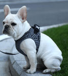 PETKIT Air Fly Harness - My Pooch and Co.