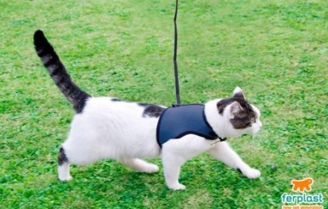 Cat T-shirt harness XL - My Cat and Co.