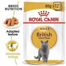 Royal Canin British Shorthair Wet Food - My Cat and Co.