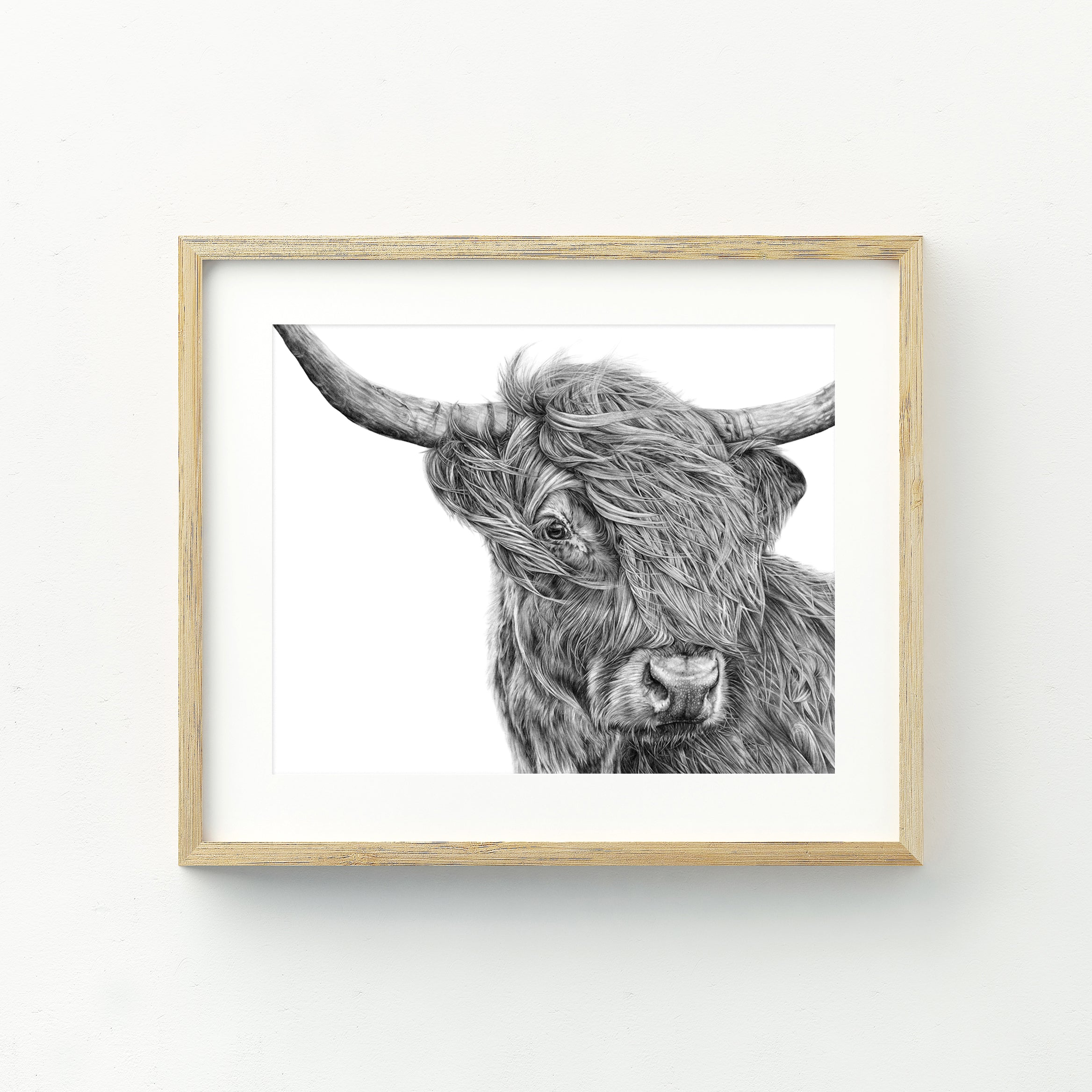 Harry the Highland Cow - A4 Print