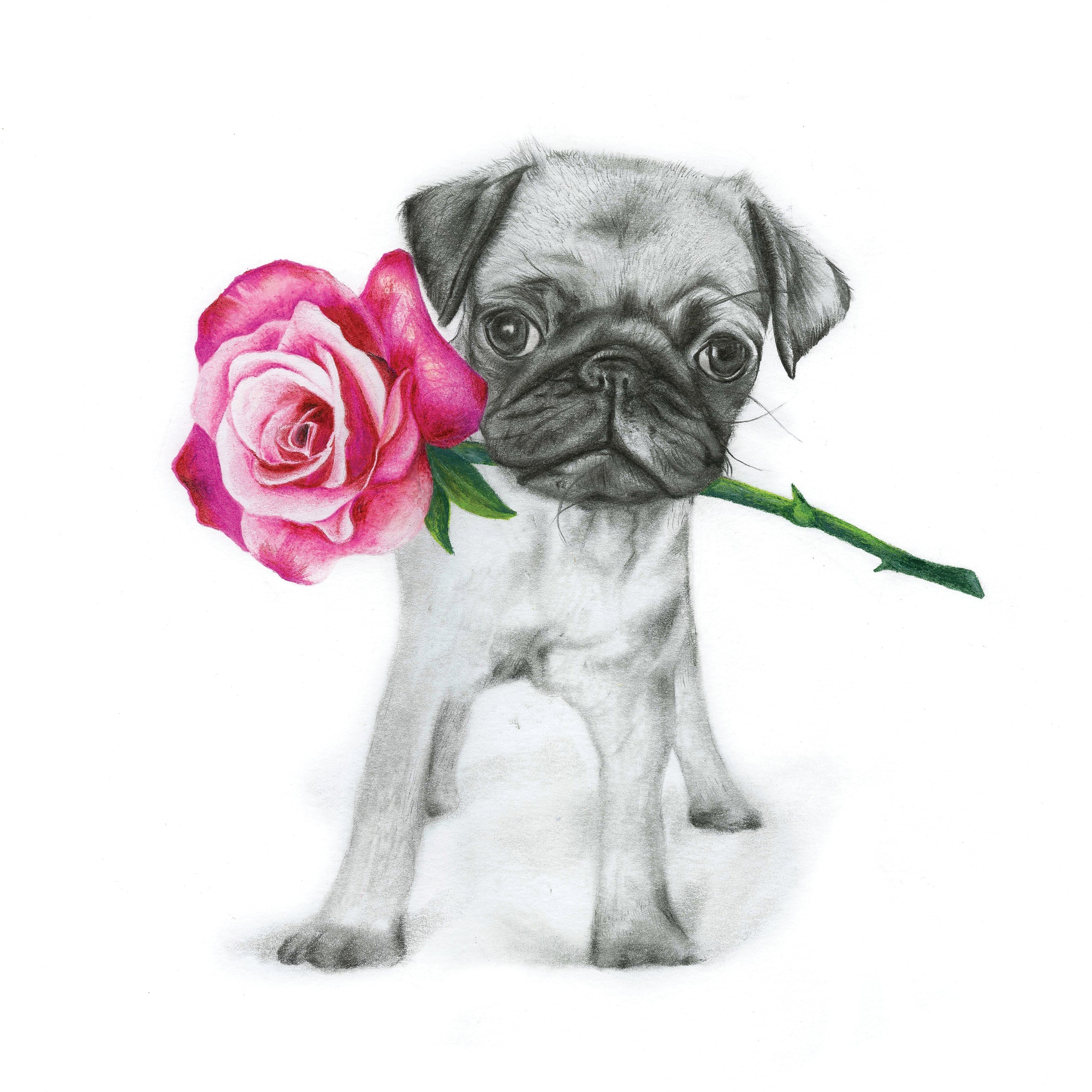 Polly the Pug - Greeting Card