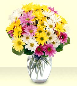 Bouquet of Mixed Daisies Wrapped