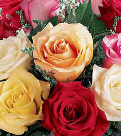 1 Dozen Mixed Colored Roses with Vase