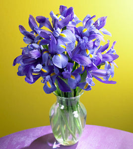 15 Iris Stems Bouquet