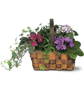 Mixed African Violet Planter Basket