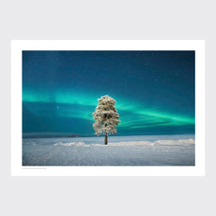 Lone Tree under a Scandinavian Aurora