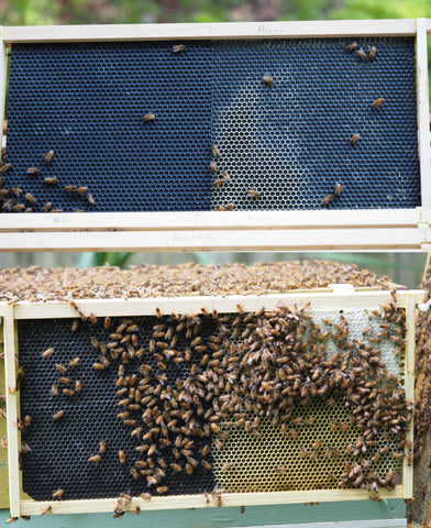 Buying the Right Frames Foundation – My Bee Supply LLC