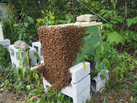 Nucs For Sale Available by April 30, 2021