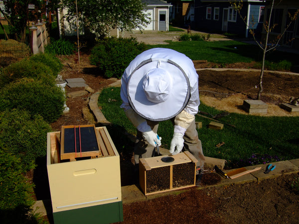 Package Bees April 12, 2019 delivery MARKED QUEEN