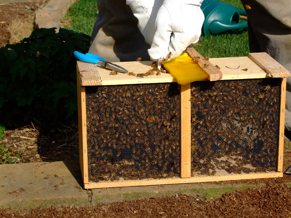 Package Bees April 12, 2019 delivery