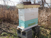 Nucs For Sale 8 FRAME MEDIUM