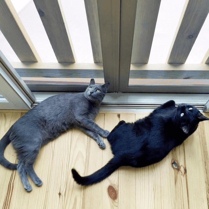 Why You Should Keep Your Indoor Cat Indoors