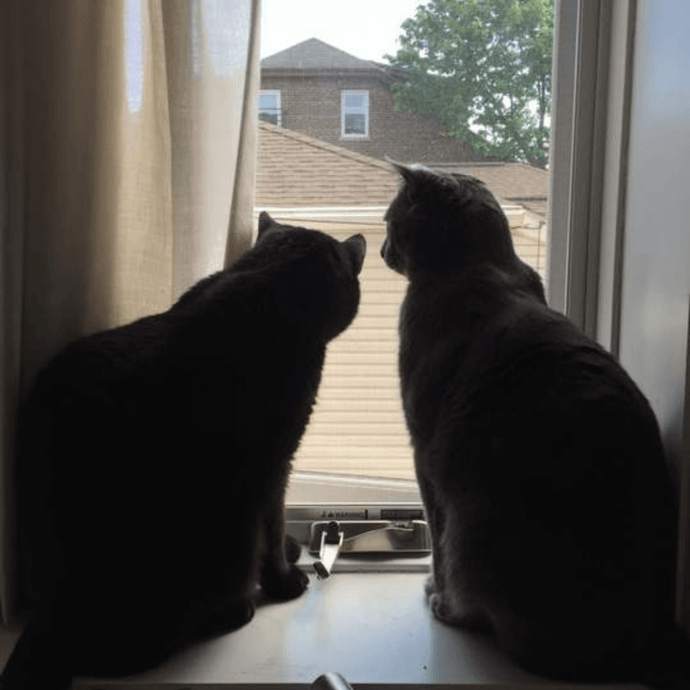 Warm Weather Means Open Windows – Be Mindful of Your Cat!
