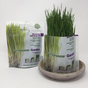 Picture of two pet grass self-grow kits standing on an all white surface surface