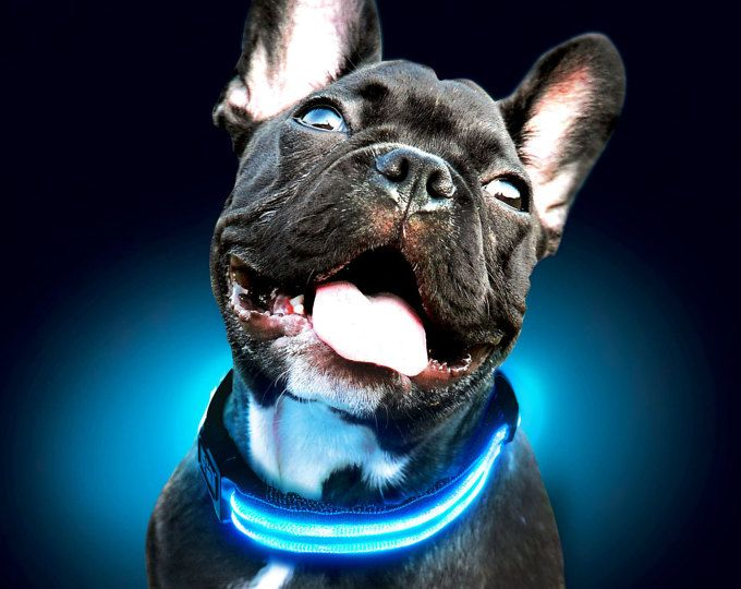 LED Night Safety Dog Collar - Sick Stuff