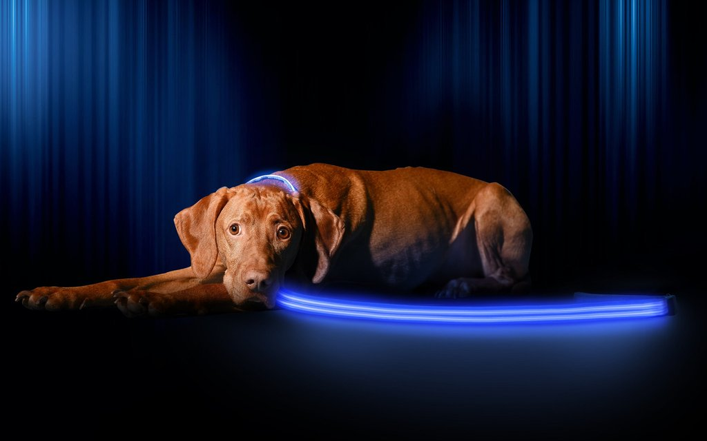 LED Night Safety Dog Leash - Sick Stuff