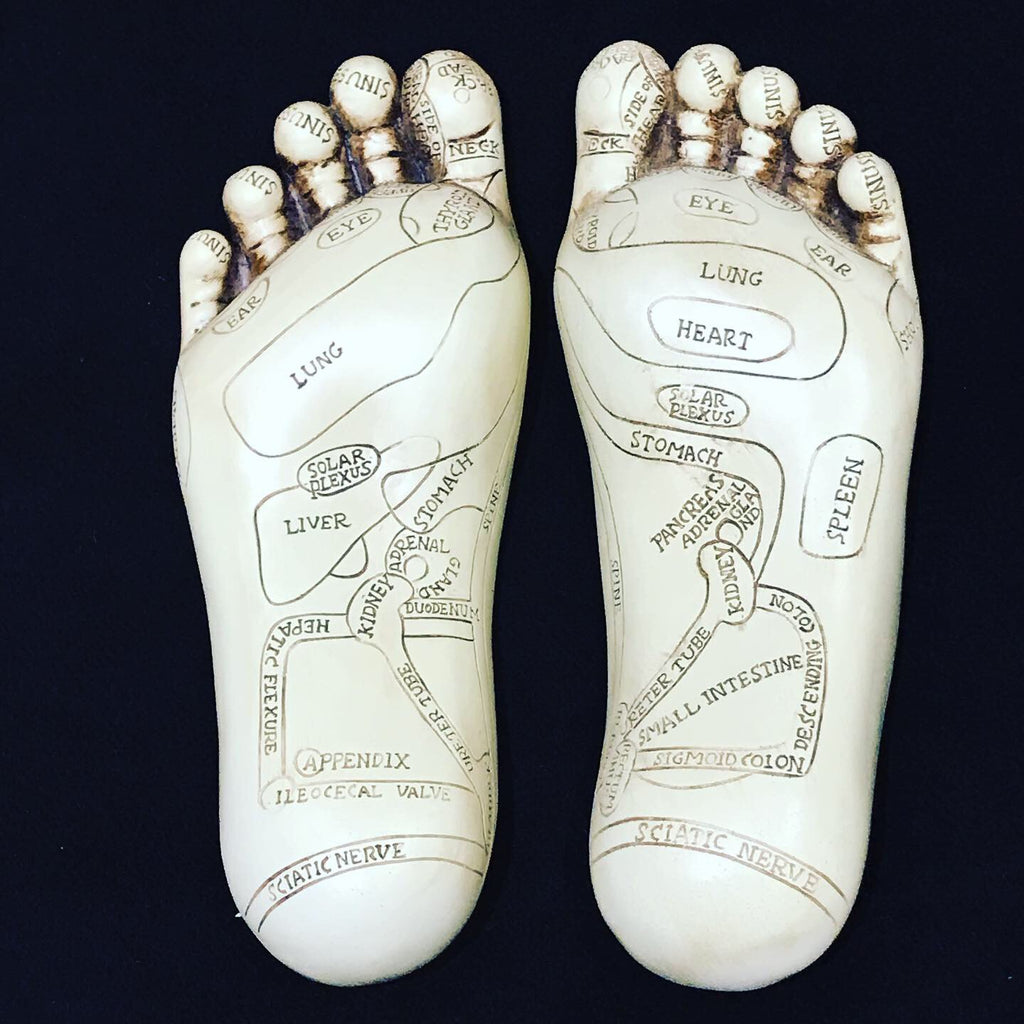 Reflexology foot model