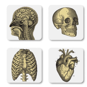 Anatomical Coasters