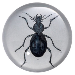 Desk Glass Beetle Paperweight