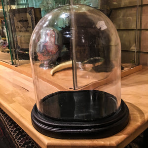 Medium Glass Dome On Stand