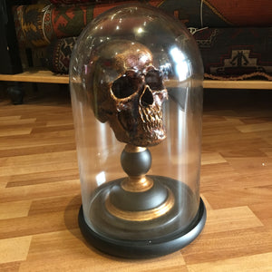 Antiqued Skull Under Glass Dome
