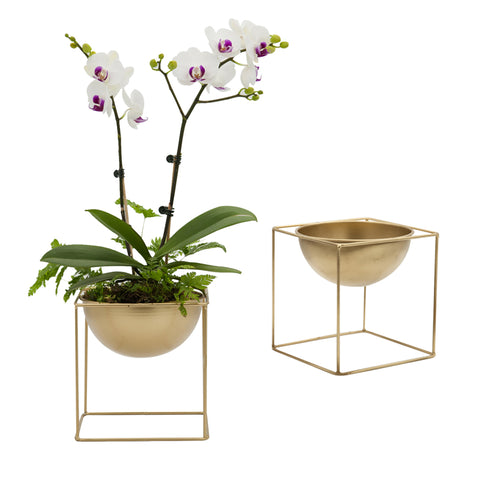 2018 METAL CUBE STAND SHELF GOLD PAINTED WITH BUILT IN FLOWERPOT PLANTER FOR GREEN PLANT SUCCULENTS THYDROPONIC PLANTS