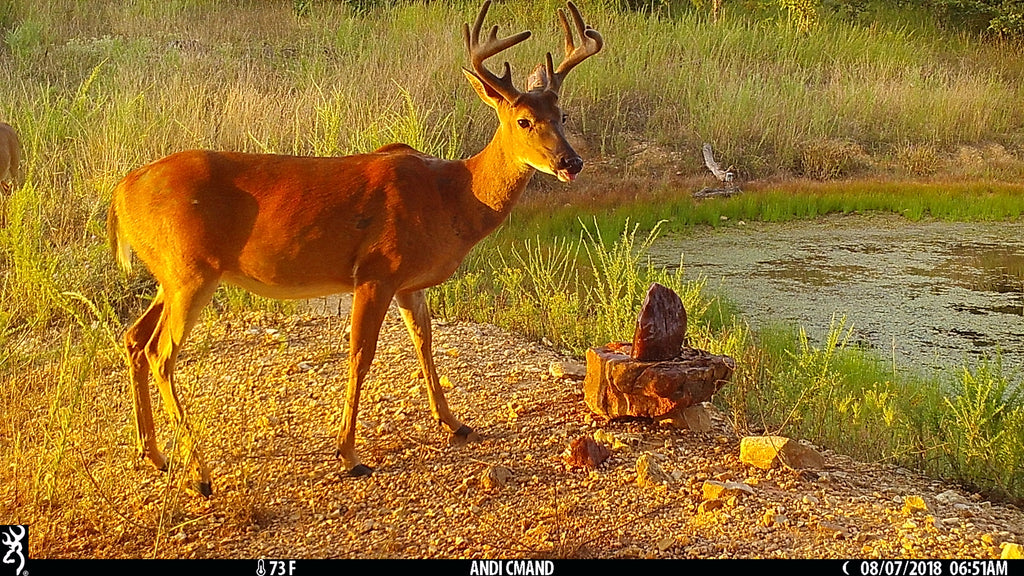 Simple Tips to Prepare for Summer Trail Camera Scouting: Part 2