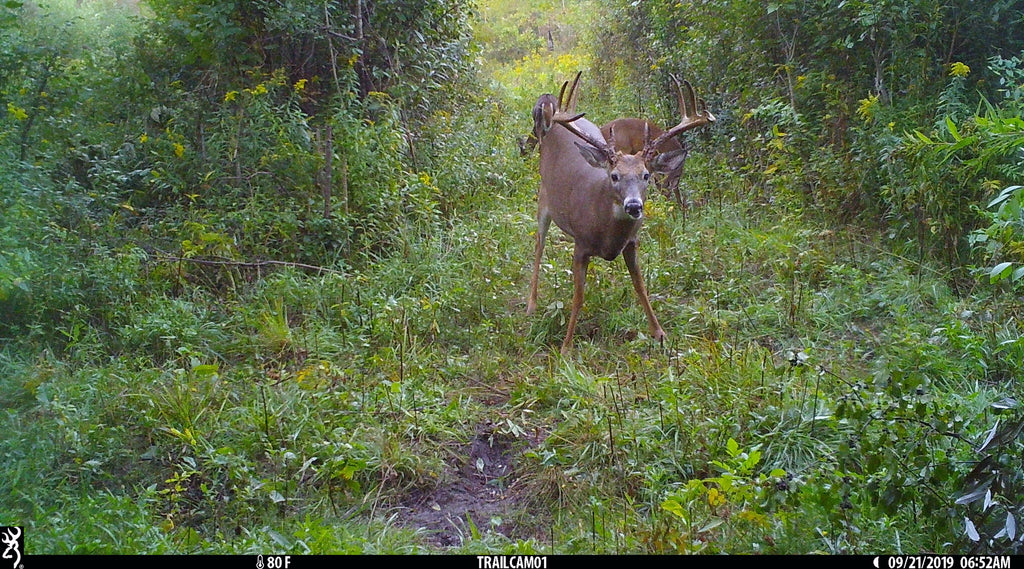 Browning Trail Cameras Help Customer Harvest Buck of a Lifetime!