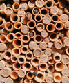 Mason Bees-Blue Orchard Bee