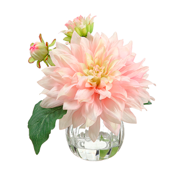 Pink Dahlia In Glass Vase