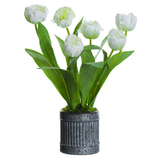 White Tulips In Metal Pot