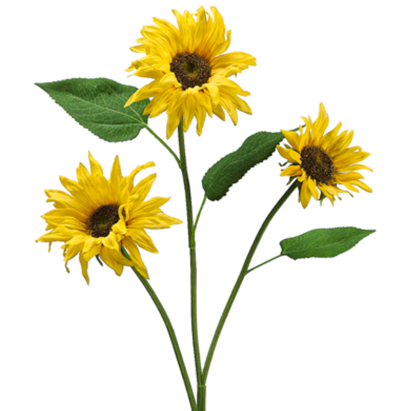 Small Sunflower Stems