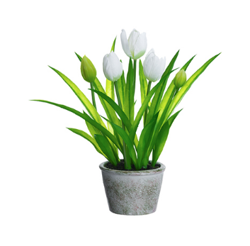 White Tulips in Pot